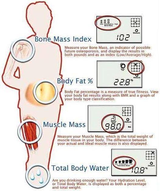 Hasil pengukuran komposisi tubuh