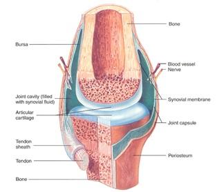 Cara mengatasi nyeri otot leher