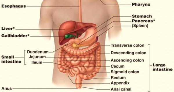 usus halus dan usus besar